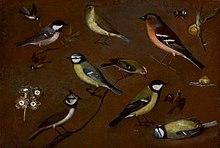 Still life birds